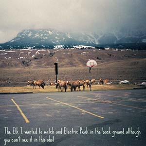 The elk I wanted to watch and Electric Peak in the background.