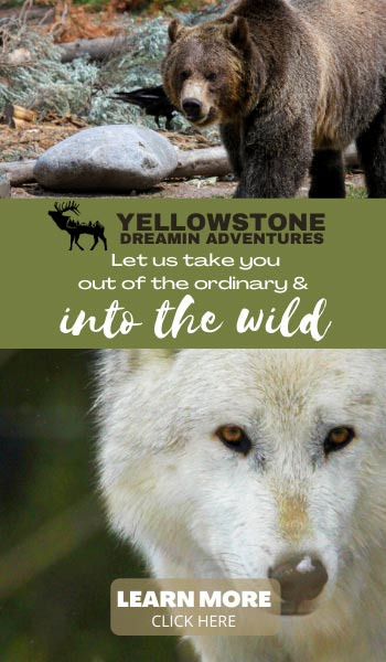 Yellowstone Dreamin Adventures - Let us take you out of the ordinary and into the wild