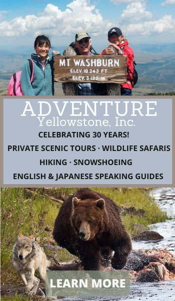 Adventure Yellowstone, Inc