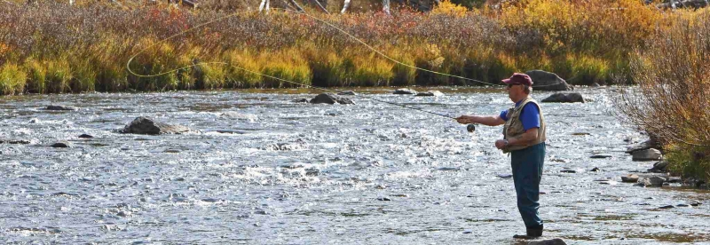 Fall in Yellowstone: The Fish are Calling