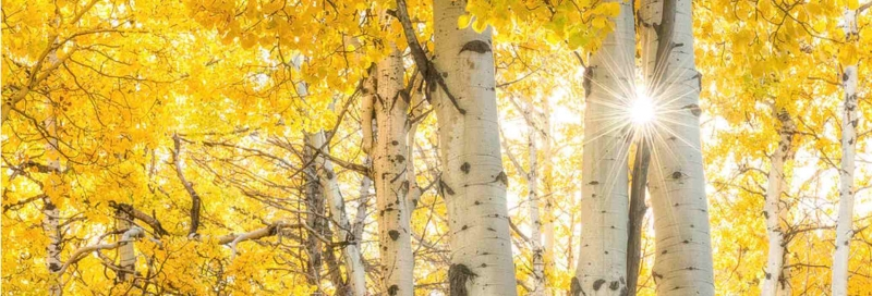 Color In The Forecast: Photographing Fall Color in Yellowstone National Park