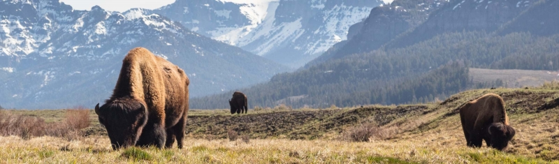 The Perfect Three-Day Spring Yellowstone Itinerary