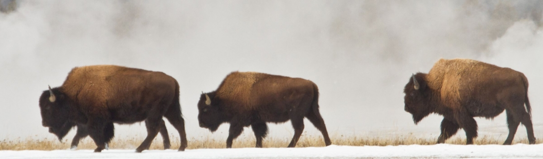 Why You Should Visit Yellowstone National Park in the Off-Season